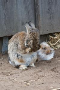 wp-kanin