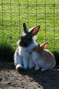 wp-kaniner