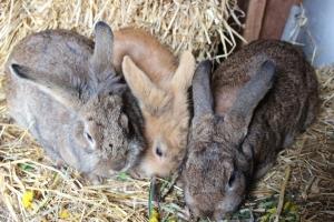 wp-kaniner2